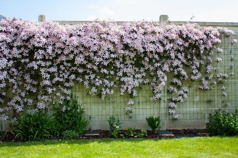 Flower hedgerow on white wall royalty free stock photos