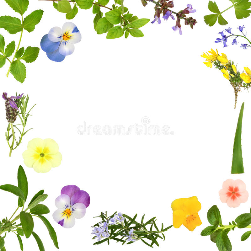 Download Flower And Herb Leaf Abstract Stock Illustration - Illustration of food, bluebell: 13502132