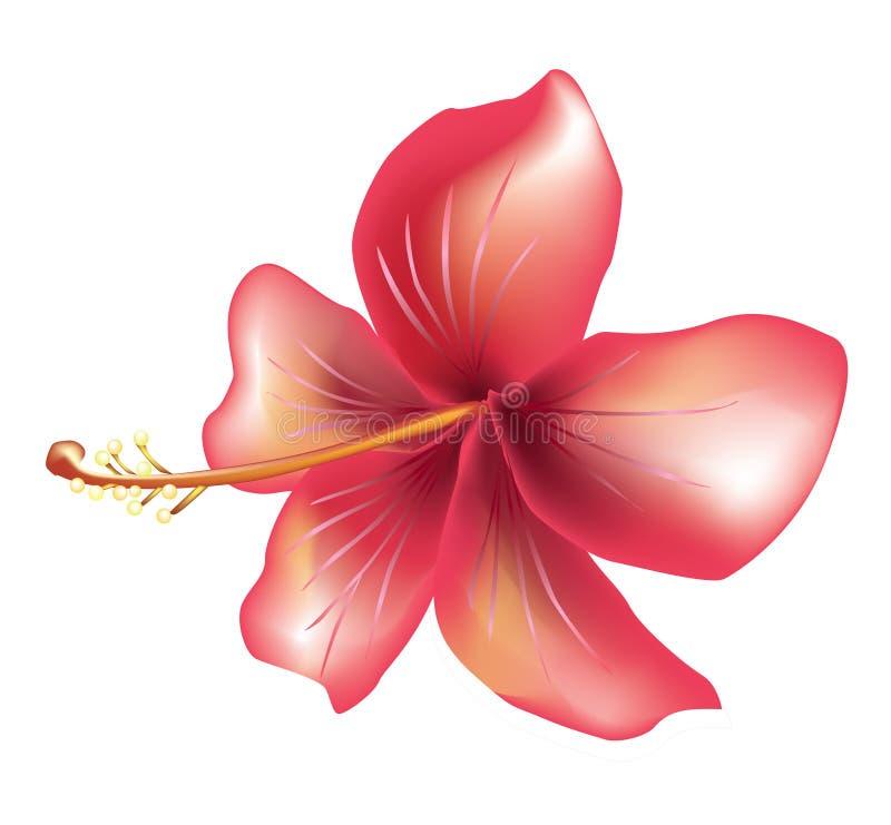Download Flower hibiscus stock vector. Image of summer, bloom, painting - 8271377