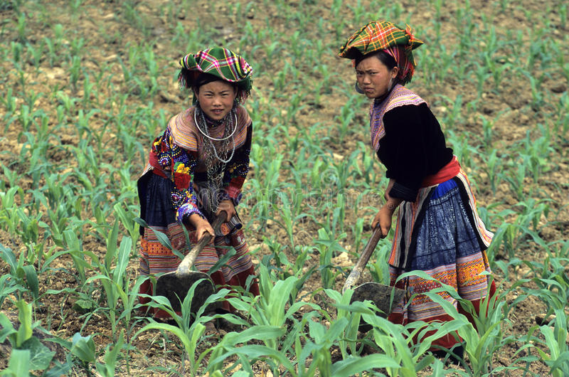 Flower Hmong Working. Two Flower Hmong women working on the field near Bac-Ha, North-Vietnam stock photos