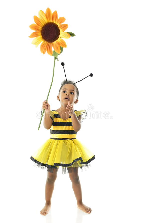 Flower Holding Bumble Bee stock photo