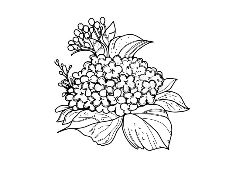 Flower. Hydrangea. Coloring for adults. Flower. Hydrangea. Coloring page for adults with black line on white background stock illustration