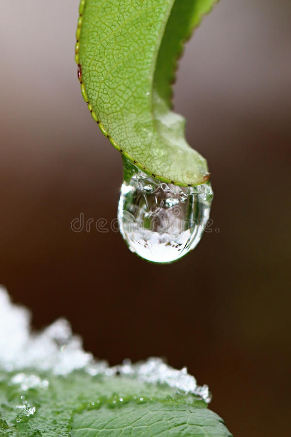 Flower in ice stock photography
