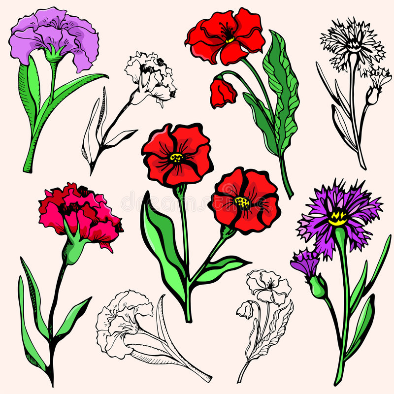 Download Flower illustration series stock vector. Image of drawing - 2746238