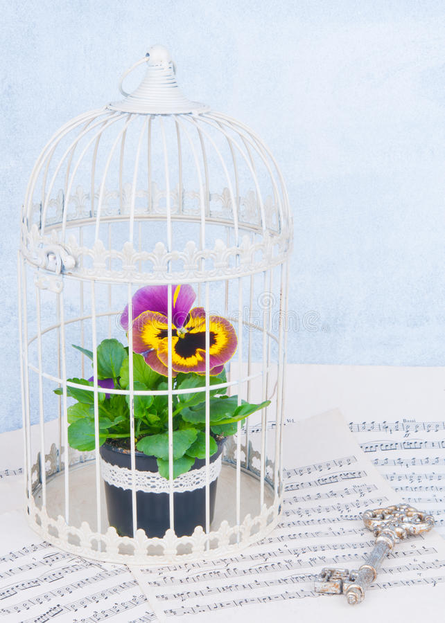 Free Flower In Cage Royalty Free Stock Images - 29997359