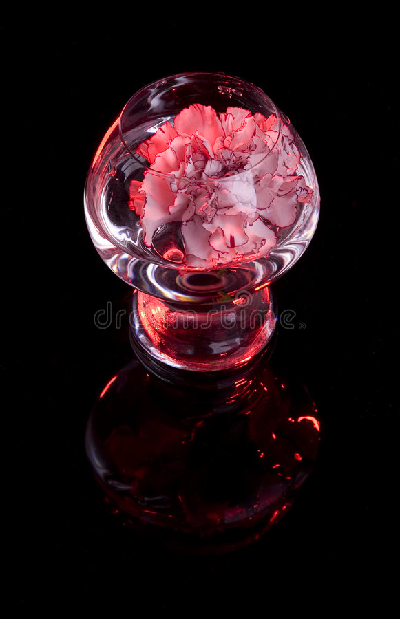 Free Flower In Glass With Reflection Stock Images - 8520974