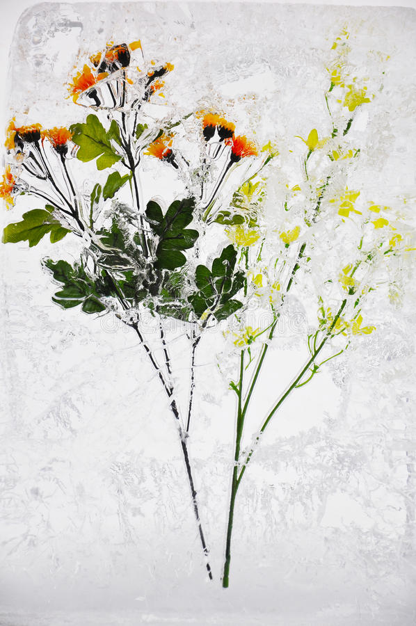 Free Flower In Ice Stock Photo - 21952050