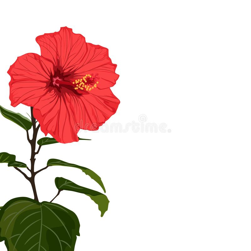 Tropical exotic red hibiscus flower branch, elegant card template. Small floral garland stock illustration
