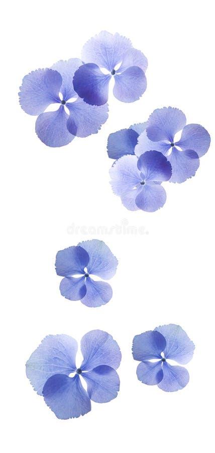 Flower isolated white background stock photos