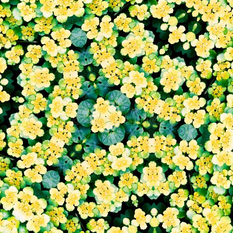 Flower kaleidoscope resembling a mandala stock photo
