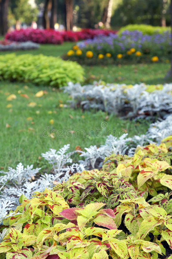 Free Flower Landscaping Stock Image - 6878621