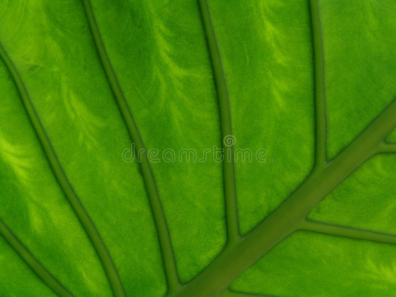 Flower leaf royalty free stock photography