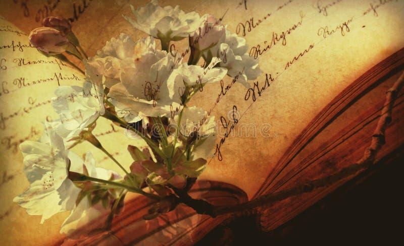 Flower, Leaf, Flora, Still Life Photography royalty free stock image