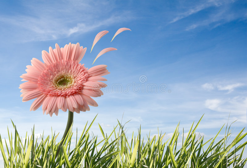 Download Flower with leafs flying stock image. Image of environment - 4158577