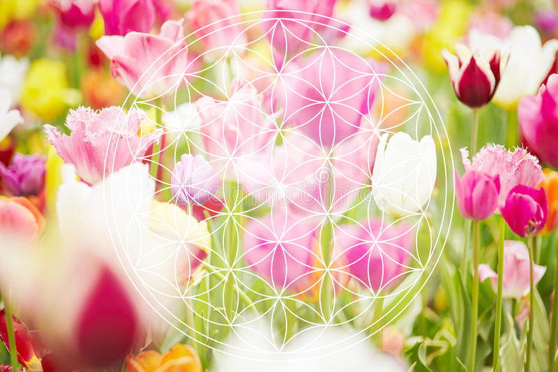 Flower of life as new age symbol royalty free stock images