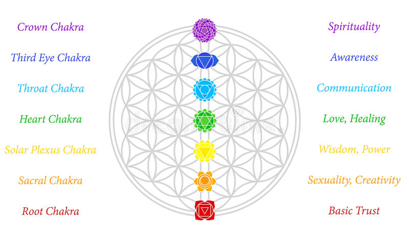 Flower of Life Chakras Description White vector illustration