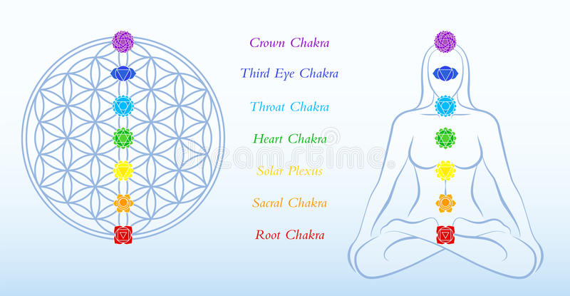 Flower of Life Description Chakras Woman. Flower of life and meditating woman, both with symbols of the seven main chakras plus description. Vector illustration royalty free illustration