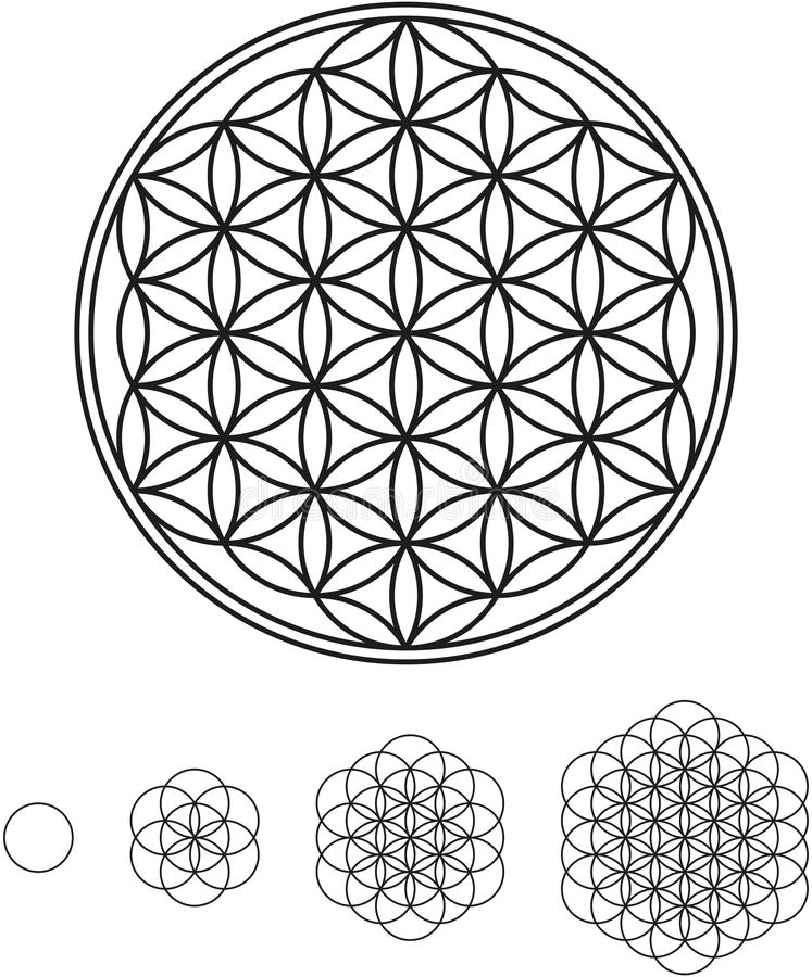 Flower Of Life Development vector illustration