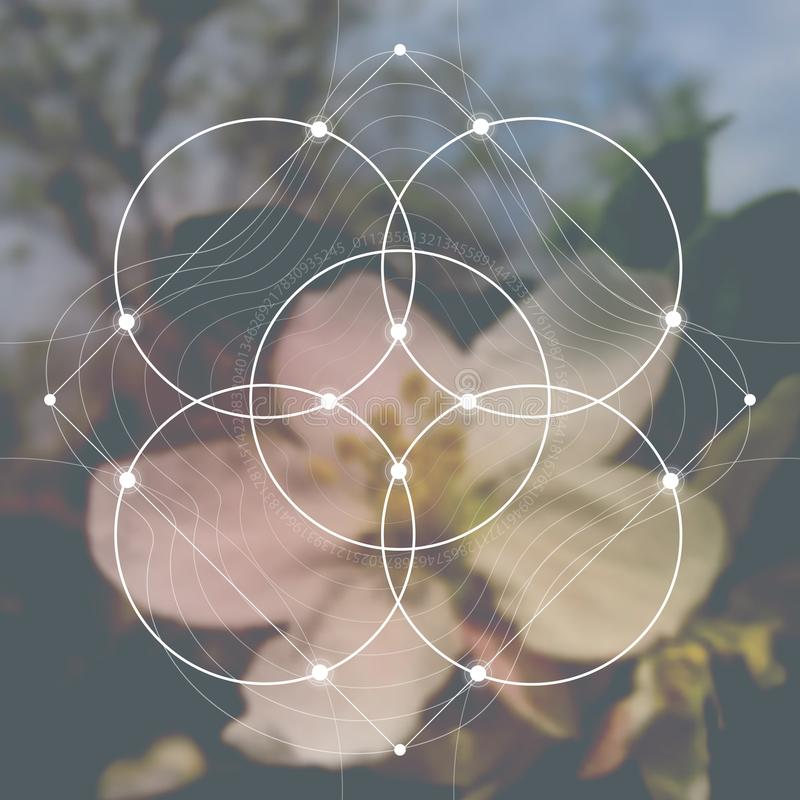 Flower of life - the interlocking circles ancient symbol in front of blurred photorealistic nature background. Sacred geometry - m royalty free stock photo