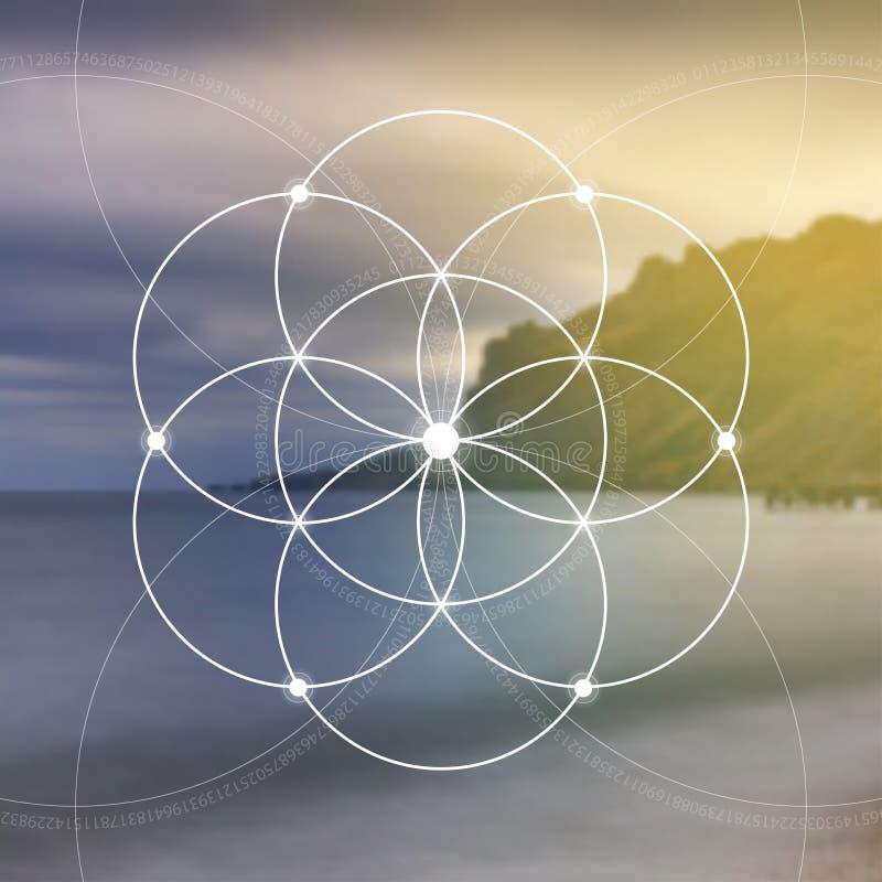 Flower of life - the interlocking circles ancient symbol. Sacred geometry. Mathematics, nature, and spirituality in nature. Fibona royalty free stock photo