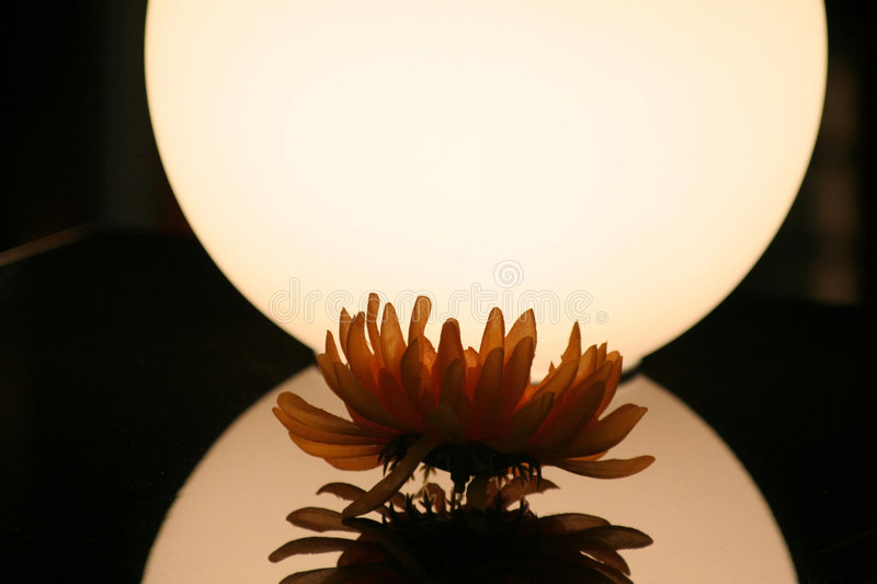 Flower with light royalty free stock photos