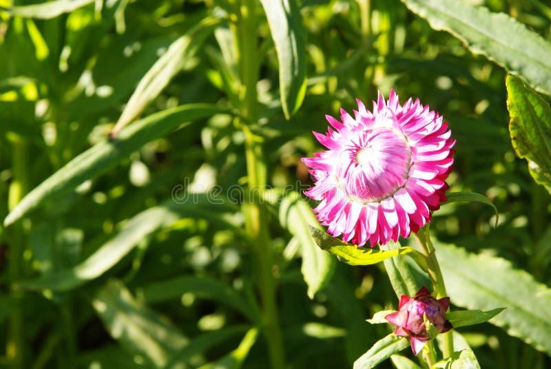 Flower in light stock photo