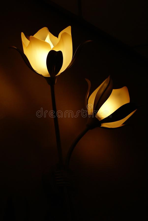 Flower, Lighting, Still Life Photography, Light royalty free stock photo