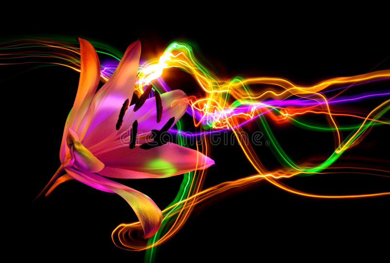 Flower a lily: aroma of night vector illustration