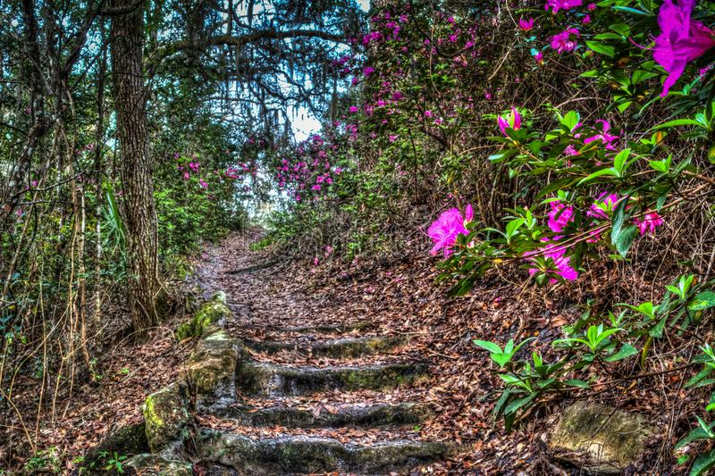 Flower lined path leads you upward royalty free stock photography