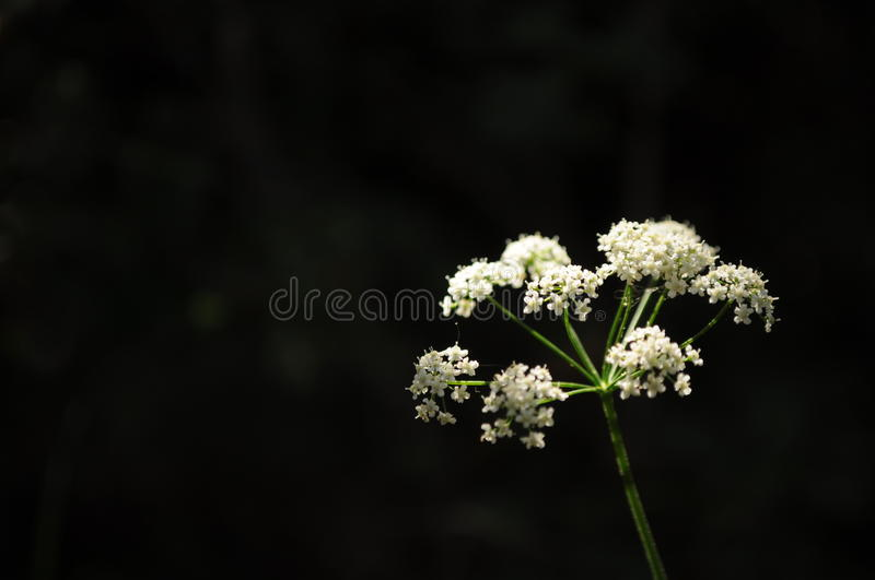 The flower. Little flower in the darkness, nature is amazing stock photography