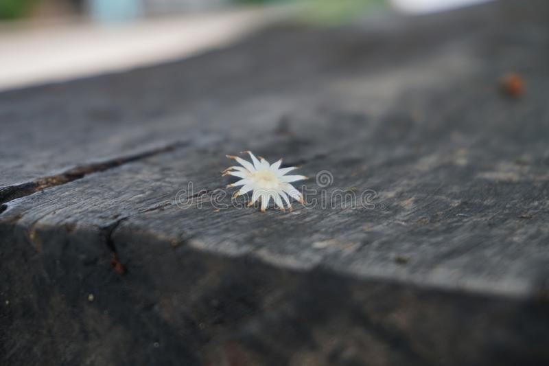 The only flower on the lonely. stock photography