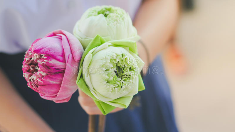 Flower of lover royalty free stock image