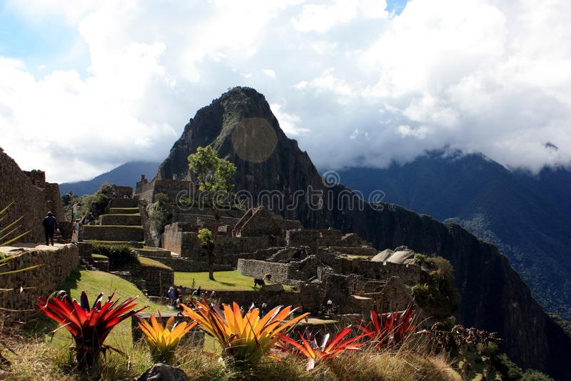 Download Flower at Machu Picchu stock photo. Image of view, andes - 20688664