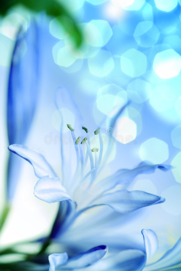 Free Flower. Macro/ Depth Of Field Stock Photos - 9061453