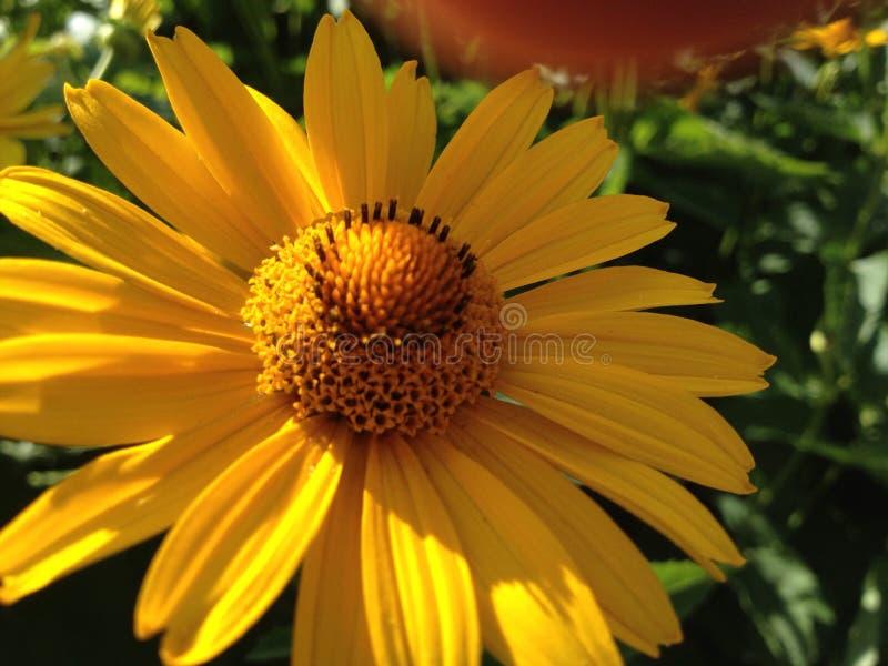 Flower. Macro photo stock photos