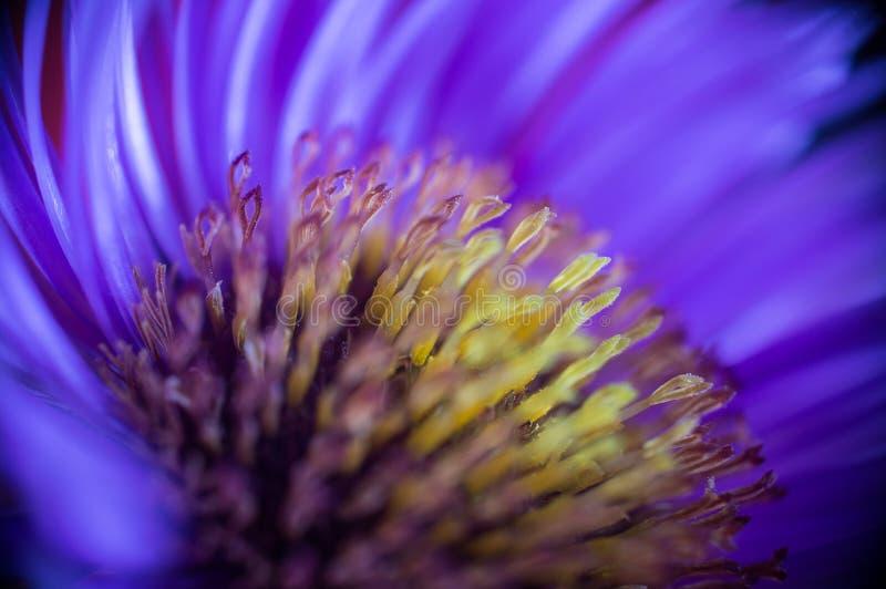 Flower nice stock image