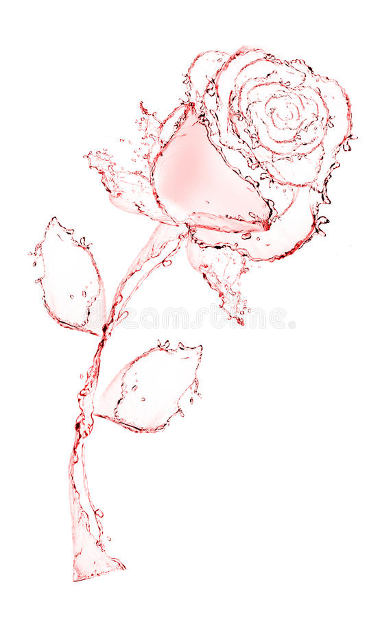 Free Flower Made Of Water. Rose. Stock Photos - 25096313