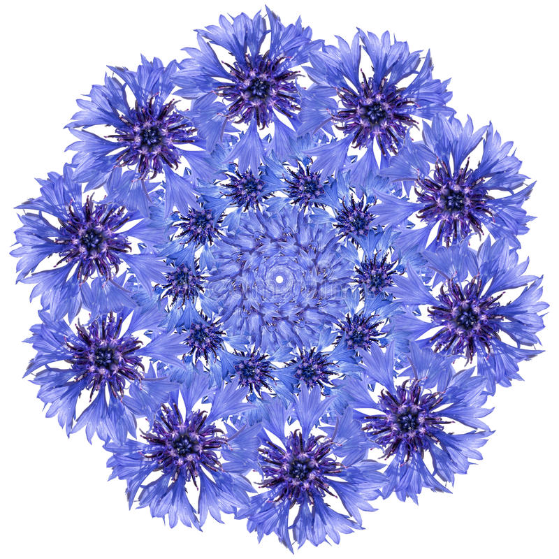 Flower mandala. Cornflower blue circular design. royalty free stock photo