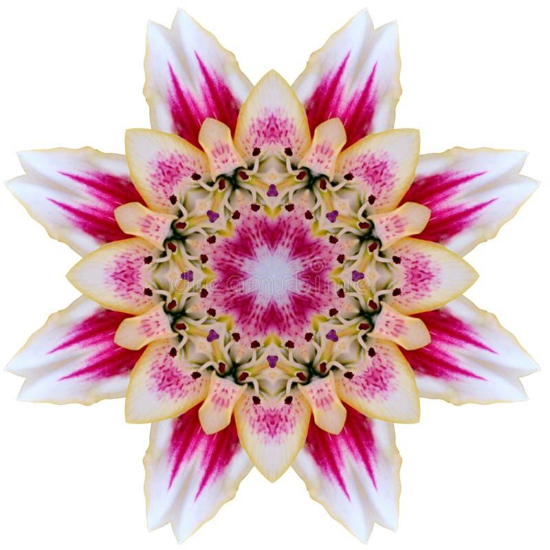 Flower mandala. On white background stock image