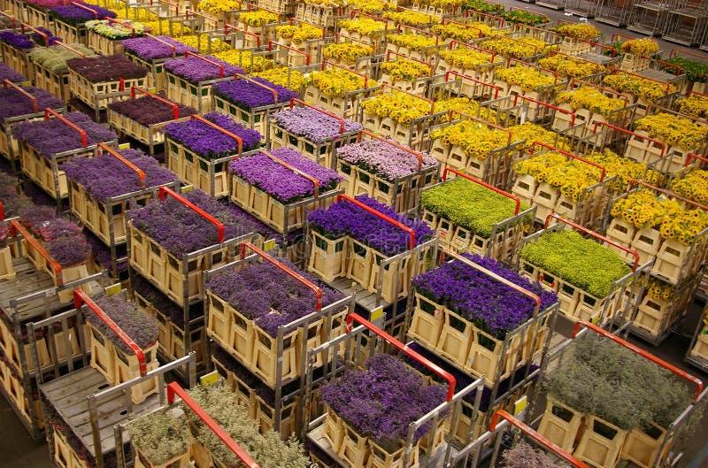 Flower market stock image