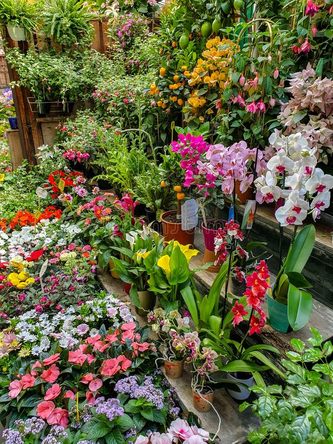 The flower market in Paris located on the Ile de la Cite, between the Notre-Dame Cathedral and Sainte-Chapelle chapel. stock image