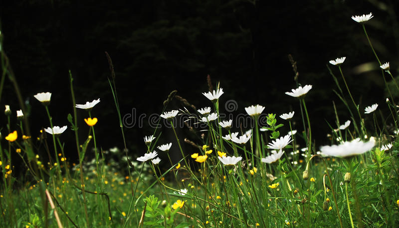 Flower meadow stock image