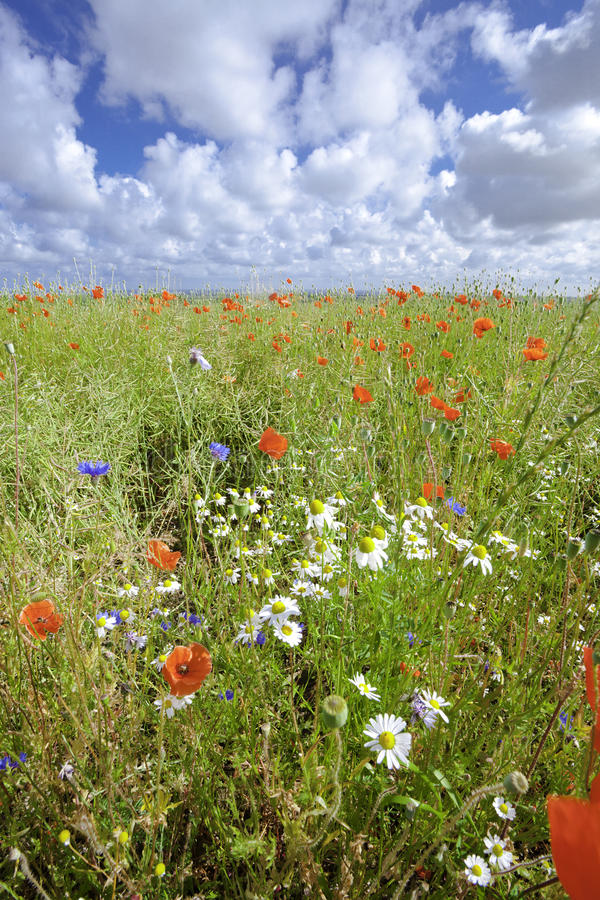 Free Flower Meadow Royalty Free Stock Photo - 15216685
