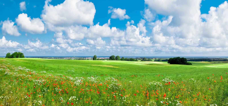 Flower meadow stock photos