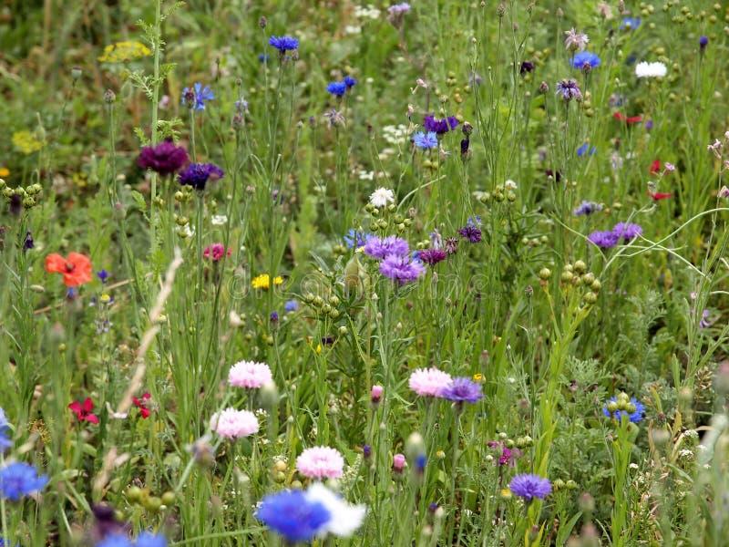 Flower, Meadow, Wildflower, Flora Free Public Domain Cc0 Image