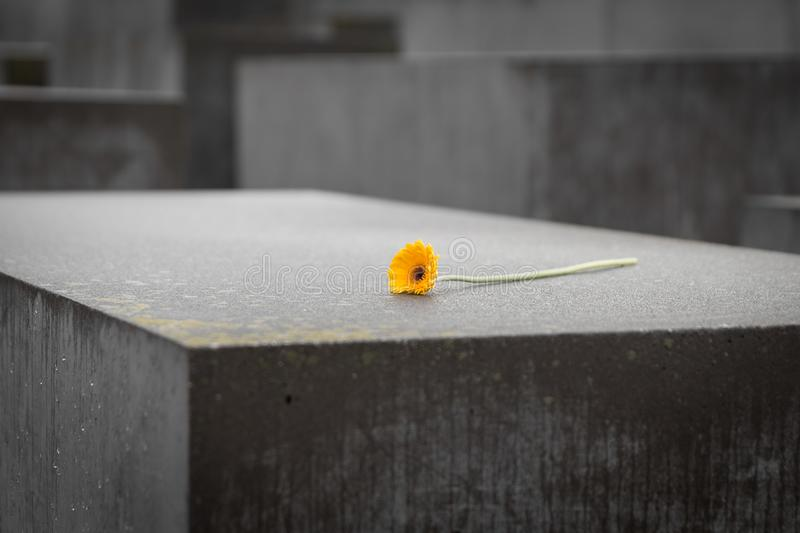 Flower in Memorial to the Murdered Jews of Europe in Berlin, Ger stock images