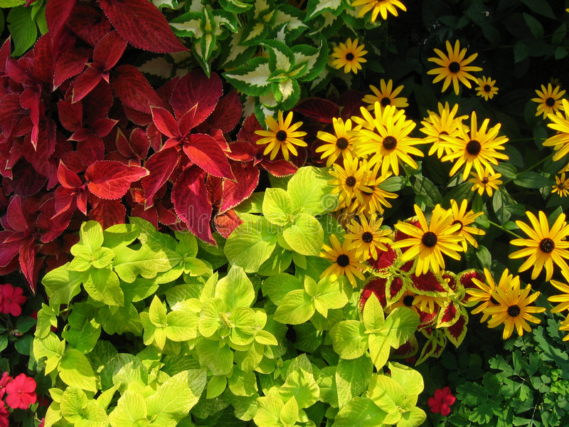 Flower Mix stock photos