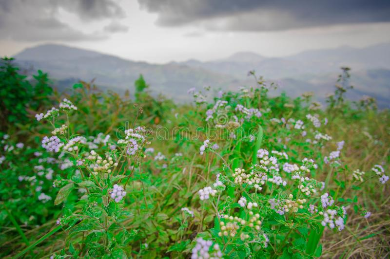 Flower on moutain. The flowers on high mountains royalty free stock images
