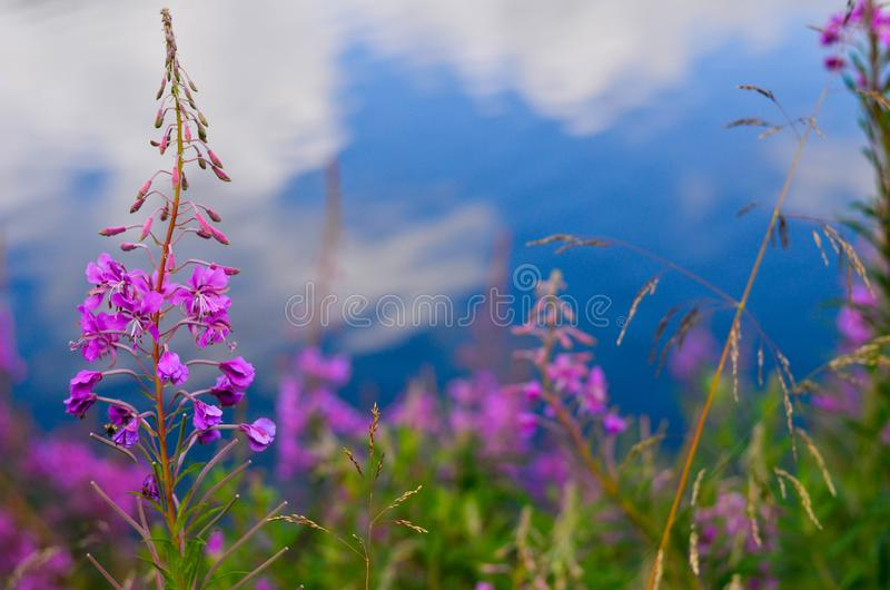 Flower in nature royalty free stock photos