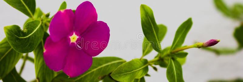 Flower nature litle. Flower button pink  green mescla stock images